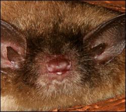 Bat control in Winchester