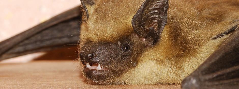 Winchester Bat Control