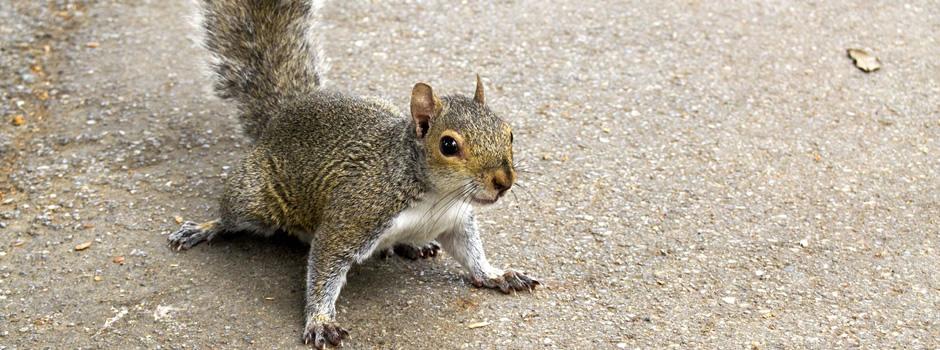 Squirrel Control Winchester